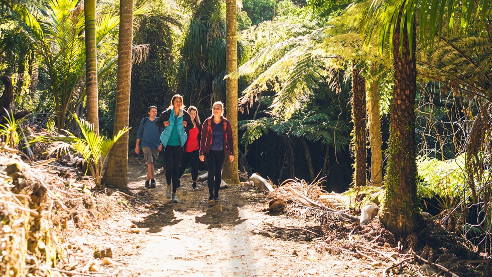 Four people walking through nikau palms on the Queen Charlotte Track.